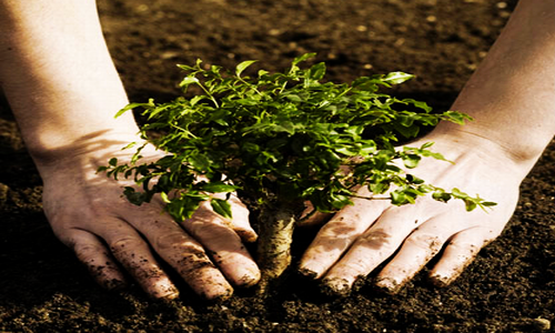 loam soil   5 Different Soil Types – Know Your Soil Type
