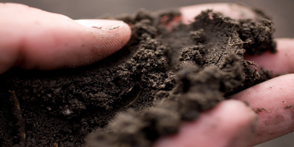 soil   Soil Facts: Basic Information on Soil You Need to Know