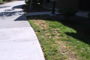 Landscaping Pictures 033 300x200   Solutions: Pet Urine on Grass, and Dog Friendly Shrubs
