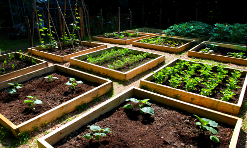 raised beds   Growing and Gardening in Silty Soil